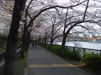 2008_0329sakura20080010