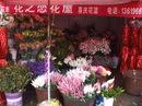 Yunnan20080080