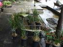 Yunnan20080114