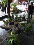 Yunnan20080115