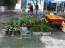 Yunnan20080117