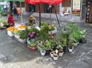 Yunnan20080118