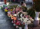Yunnan20080139