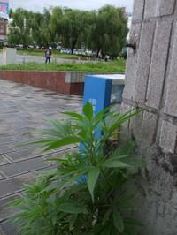 Yunnan20080278_800