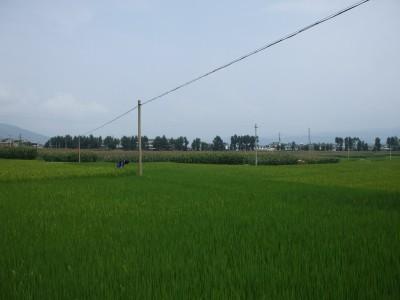 Yunnan20080242_800