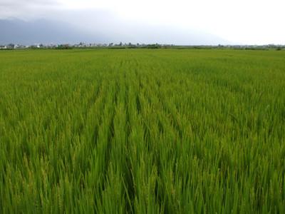 Yunnan20080311_1024